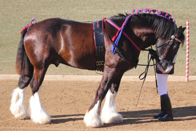 Spoke too soon – Cerefin down with colic 15/10/13