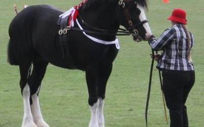 our-shires-rebel-4