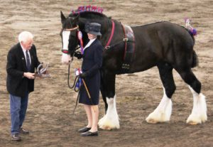 blog-2-national-champion-stallion