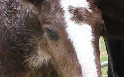 gallery-kytan-foal-2010
